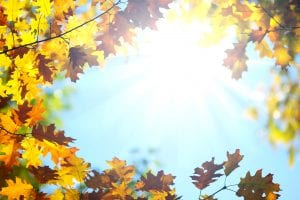 Air Quality Concerns You Should Know This Fall