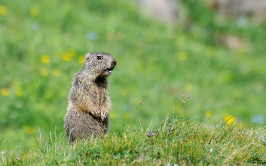 Will Groundhog Day Affect Your Winter Heating?