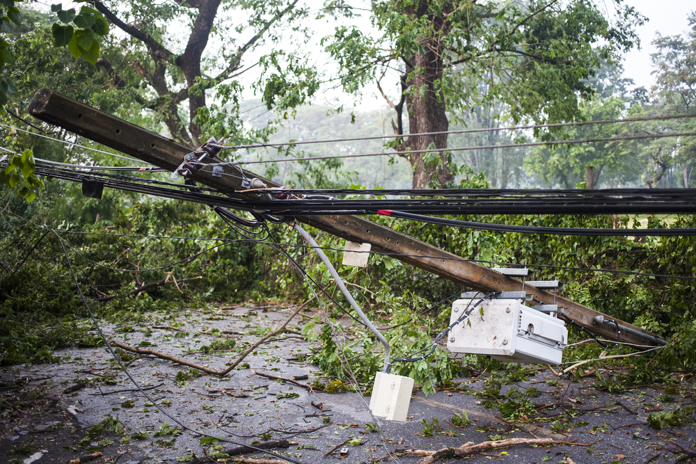 Image of a tree damaging a power line after a storm